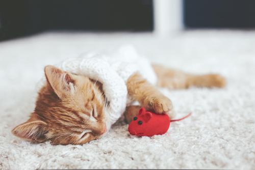 猫のぬいぐるみを作ってみよう♪ 作り方掲載サイト