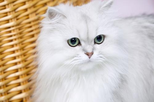 動物,犬,猫,しつけ,飼い方,育て方,病気,