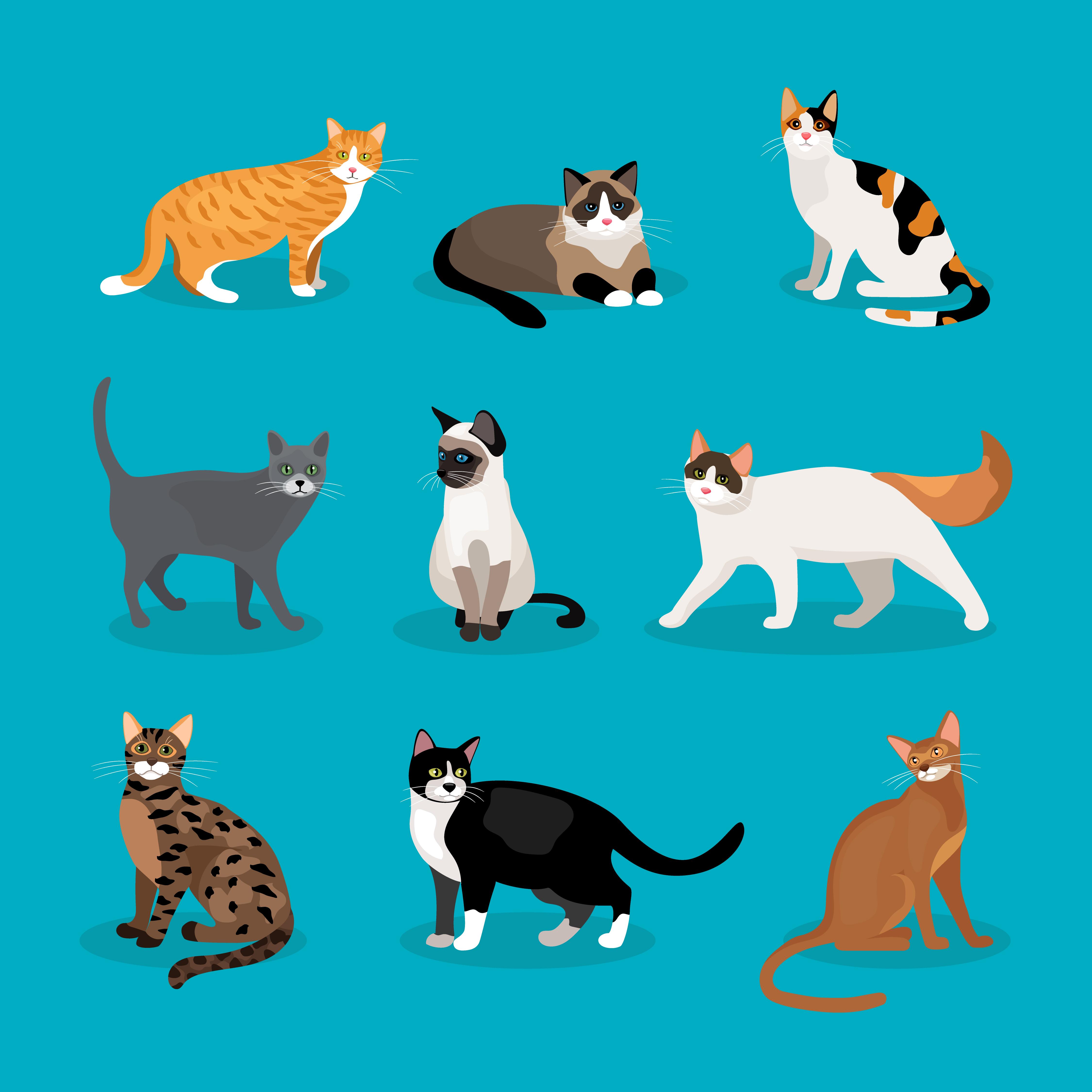 可愛い猫のイラストを描くコツは? 5ステップで見る描き方