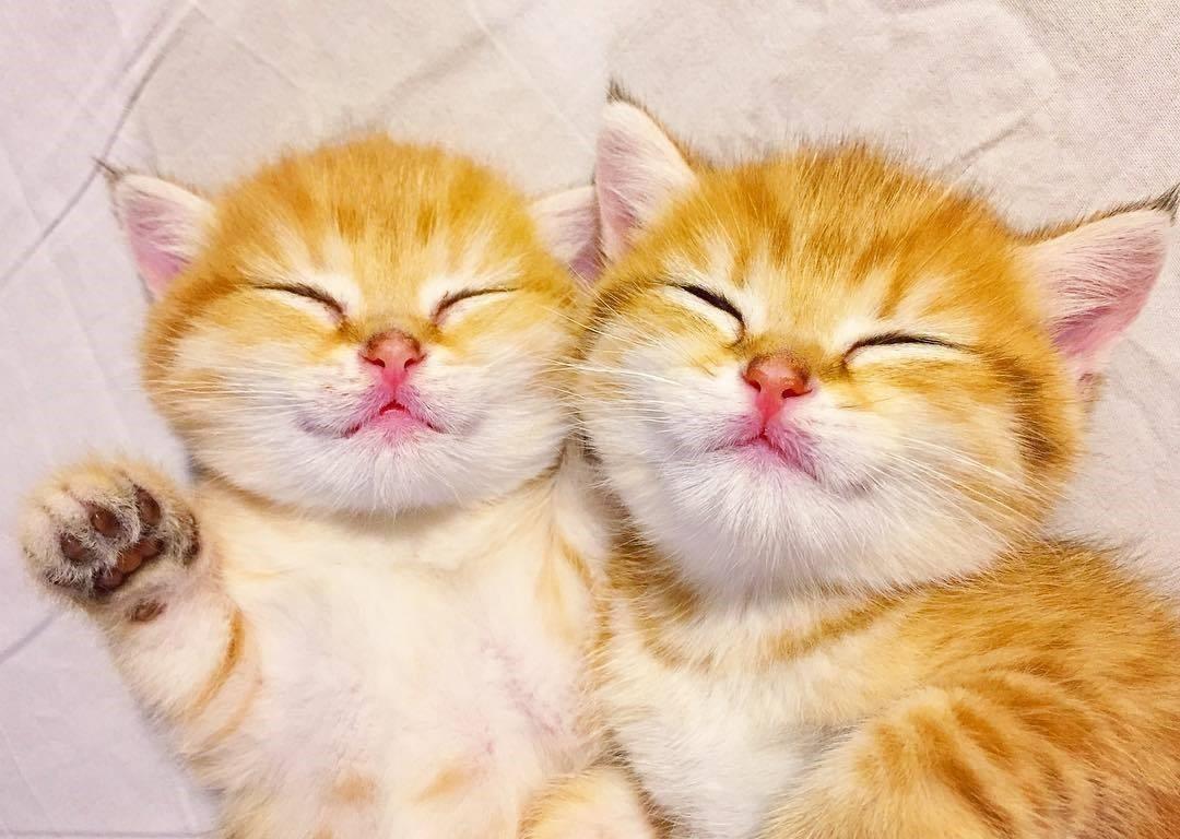 【まるで天使♡】どんな時も離れない、なかよし双子の子猫ちゃんの可愛さに… 心を溶かされる(15枚)