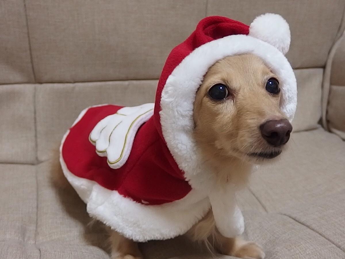 「プレゼントのお届けでーす!」