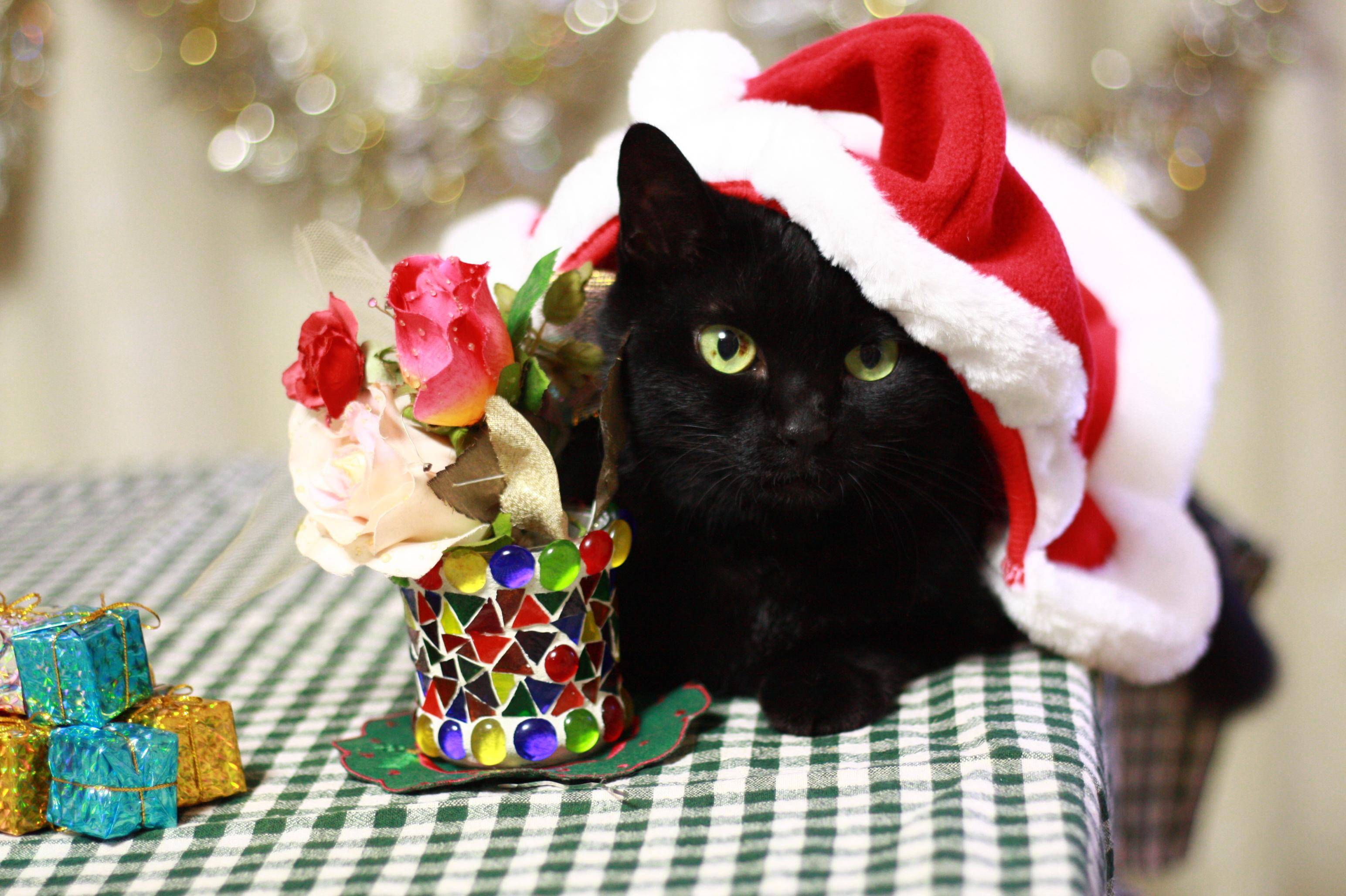 「ふふ、このプレゼントはいただいたにゃ…♡」