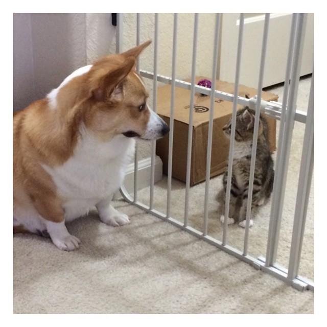 """お互いを慣れさせるため、1ヵ月間 """"柵ごし"""" に会っていた犬と猫。柵がとれた瞬間…♡ 7枚"""