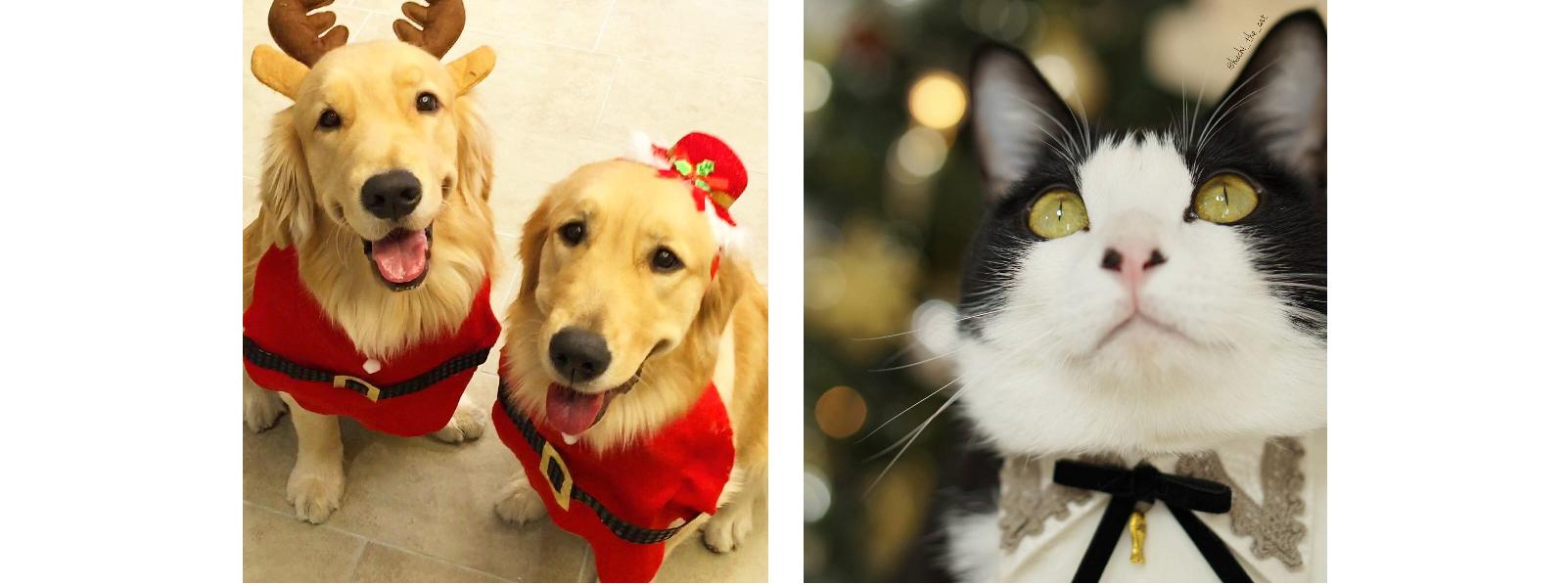 【メリークリスマス!】わんこ&にゃんこもクリスマスを満喫しちゃう(*´艸`*)♡ 9選