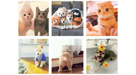 54万枚以上から厳選! 今年もっとも「いいね!」が多かった犬猫写真は…(*´艸`*)♡