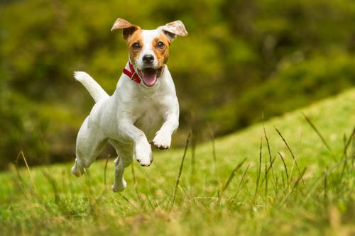 【犬の面白動画】 犬好き、集まれ。犬のおもしろ動画だよ~!