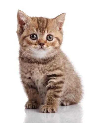 生まれてから8ヶ月。子猫の体重はどのくらい?