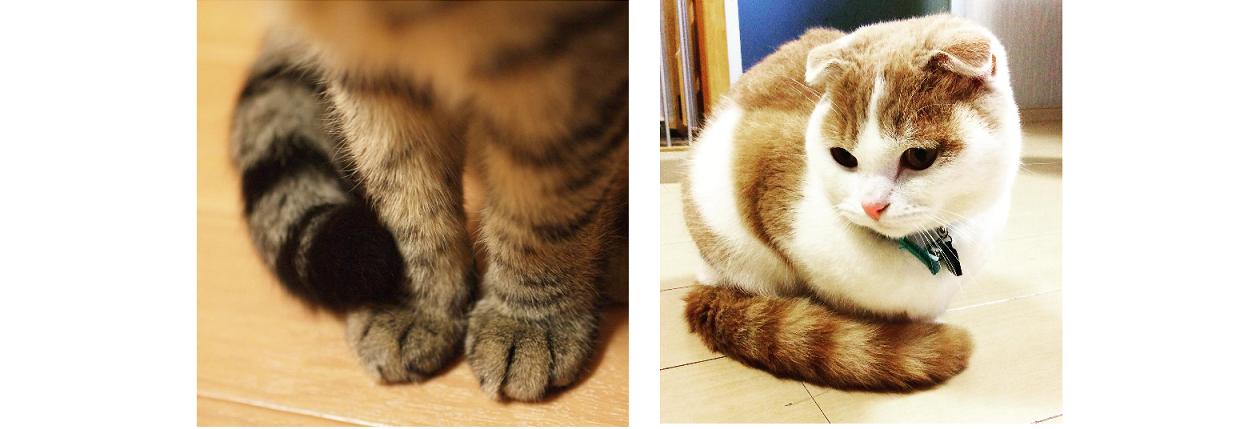 【ふわふわ尻尾+もふもふ前足】寒がりなねこ達の、しっぽマフラーを集めました…♡(写真8枚)