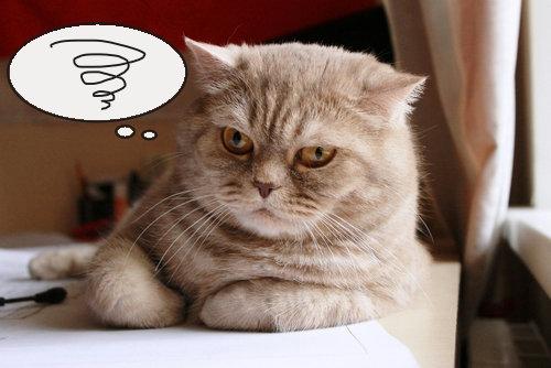 ストレスサインは猫ちゃんによって様々