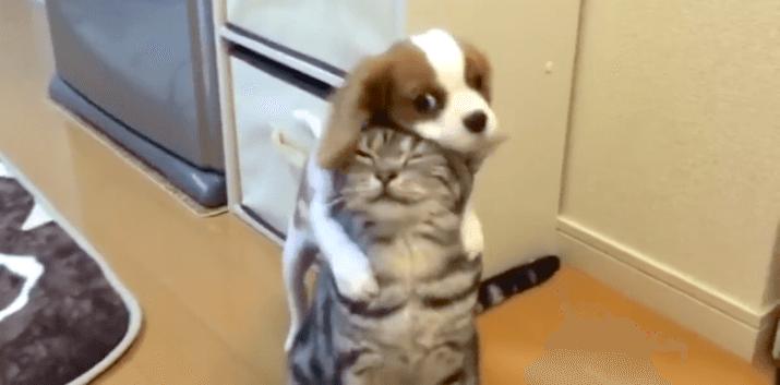 【かまって攻撃♡】遊んでほしい子犬は、ネコさんに熱烈なハグを… その結果は(*´v`*)