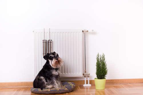 犬におすすめの暖房器具はこれだ! おすすめ暖房器具特集