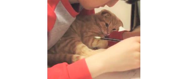 勉強中のお兄ちゃんの傍に居たかった子猫。腕の中で待つ、健気すぎる様子にキュンと来る(´;ω;`)♡