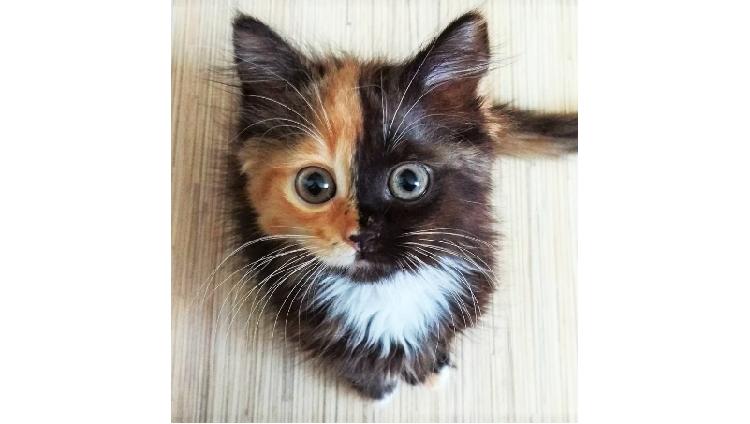 【右と左で全然違う♡】美しすぎる二色模様の保護猫ヤーナ。飼い主さんの愛に包まれて…(12枚)