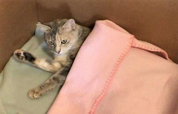 【毛布の中には】キウイという名前のママ猫の赤ちゃんたちが、衝撃の姿だった…(・。・)?
