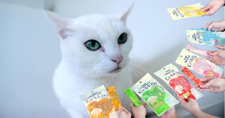【予想外の結末!?】6種類のおやつを前にした人気猫あなごさん。この後とった行動とは…(*´艸`*)♡