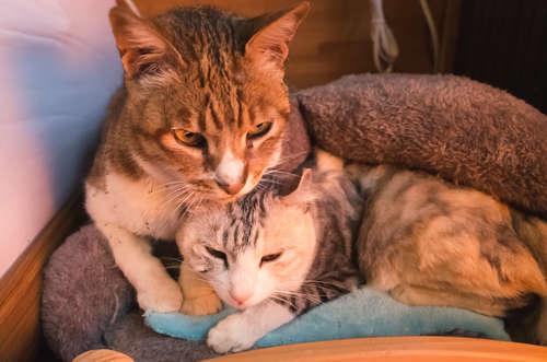 猫の冬のお留守番には暖房必須? 猫の防寒対策について