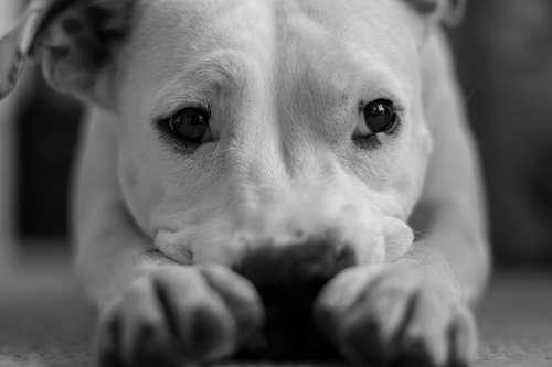 犬の腎臓の病気で、最も多い慢性腎不全。その症状に気がつけていますか。