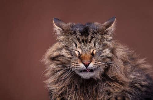 猫の鼻詰まり! その原因や対処法とは?