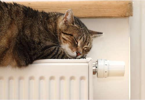 猫ちゃんにおすすめ! 暖かくて安全な暖房器具を紹介します