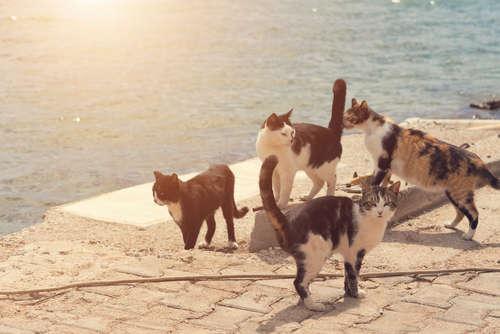 日本で一番多い!? 雑種猫ちゃんの特徴や性格について