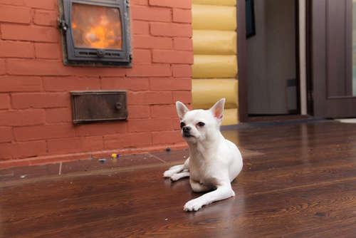 【チワワの越冬】冬のチワワの防寒対策について