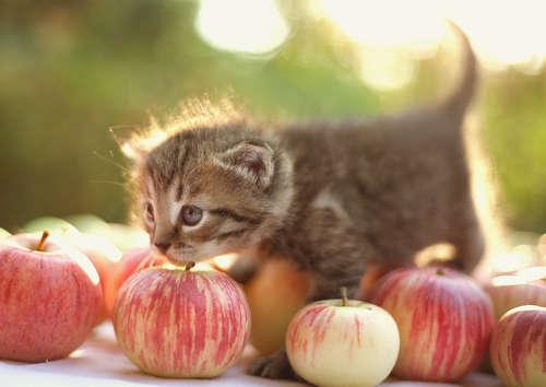 猫にりんごをあげても良いの? 適切な与え方も紹介します