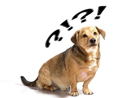 【知ってビックリ】犬の語源について