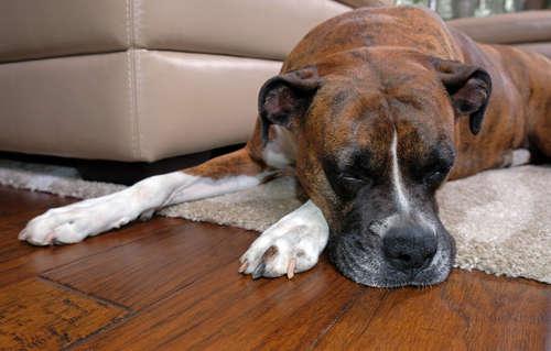 犬に暖房マットを買ってあげよう! 冬のお留守番に最適です