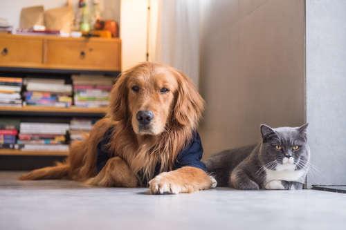 【犬と猫】一人暮らしで飼うなら、どっちがいい?