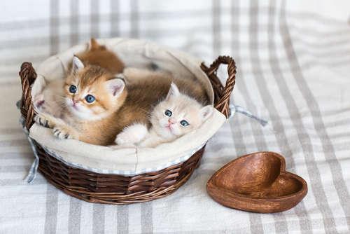 【猫赤ちゃん☆3ヶ月まとめ】~3ヶ月赤ちゃん猫の育て方・ケア法をまとめました!~