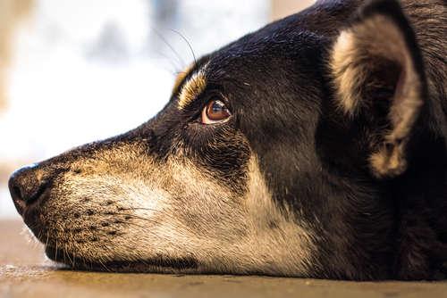 犬のてんかんはどんな症状が出るの?発作が起きても落ち着いて対処を!
