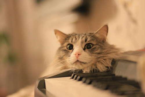 猫に音楽? 猫のための音楽「Music For Cats」が話題