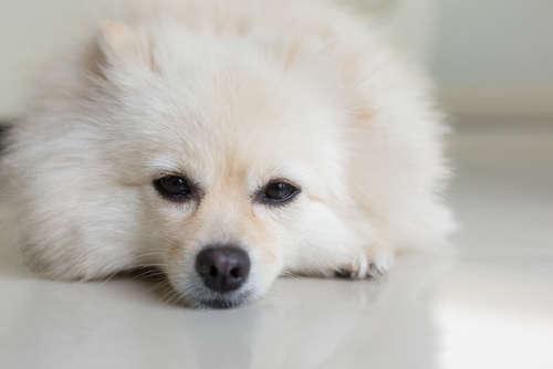 愛犬が嘔吐・下痢をした時、この病気を疑ってみよう