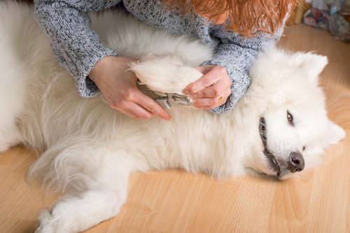 嫌がる犬の爪切り…コツってあるの?