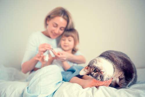 子猫を飼う予定の方へ里親になりませんか? 大阪府の里親募集情報