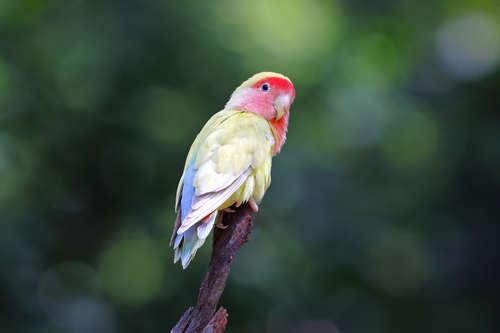 ペットとして人気の鳥、厳選5種!