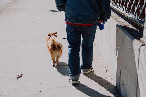 犬の冬の散歩はどうしたらいい? 工夫ひとつで快適散歩