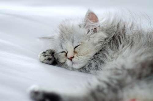 動物病院が協賛している里親募集案内を使って、保護猫ちゃんの里親になるという選択肢