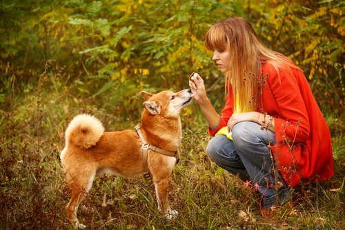 """【柴犬4ヶ月☆しつけ方】~行動が無意識なものではなく""""目的を持つこと""""へ!!~"""