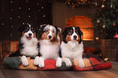 犬のお留守番に暖房はつけていくべき? 冬の留守番について