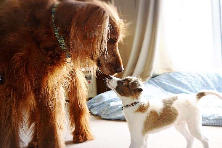 【愛犬といつまでも一緒にいたいから…】そこで飼い主さんがとった驚きの行動とは?