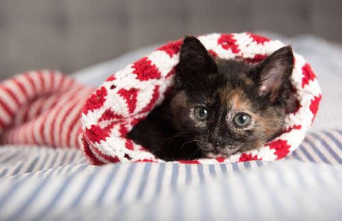 猫の里親になる方法は?公共機関・民間団体、里親募集している猫カフェも。