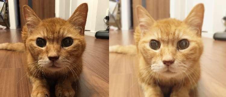 こちらはPECOスタッフの愛猫「はまち」くん♪
