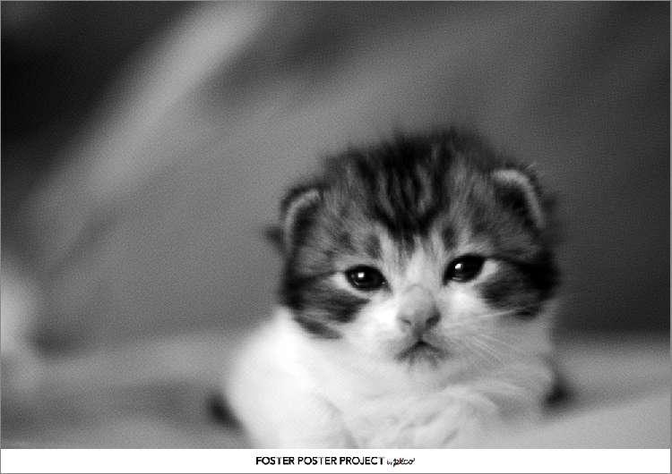 子猫のモイちゃん