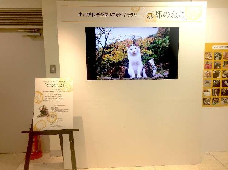 中山祥代デジタルフォトギャラリー「京都のねこ」