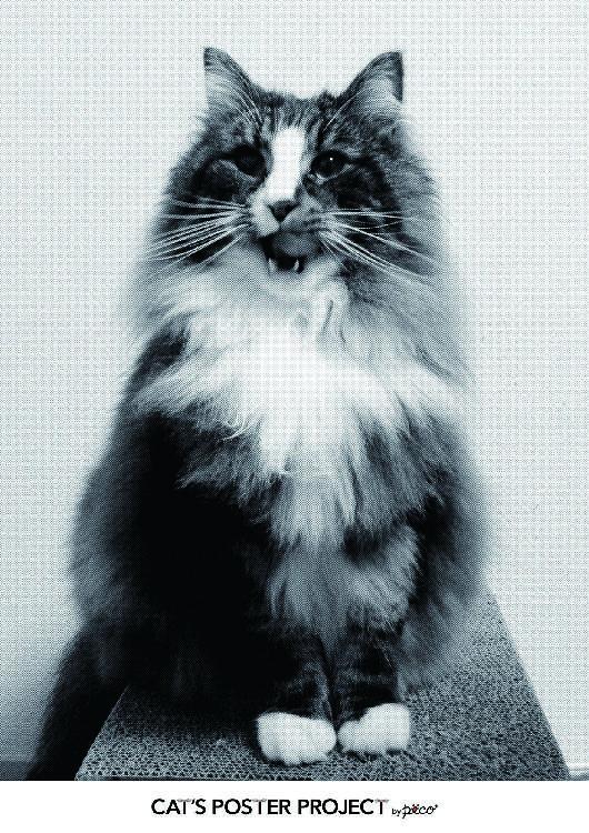 お家の猫ちゃんのベストショットを、こうやってポスターにすると…超オシャレだにゃーん。