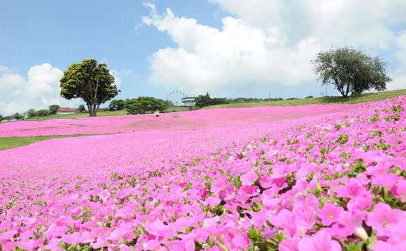ピンクのお花が可愛い♡