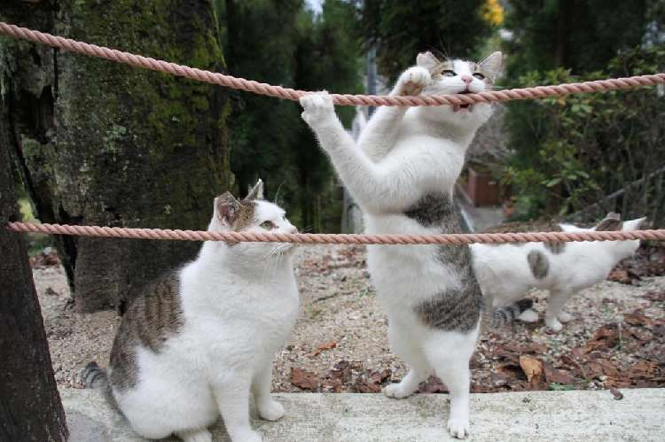 ロープと格闘するねこと、冷静に眺めるねこ。