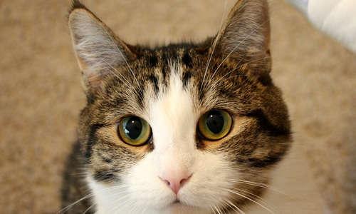 生まれてから五ヶ月の猫。えさの量はどのくらいがいいの?