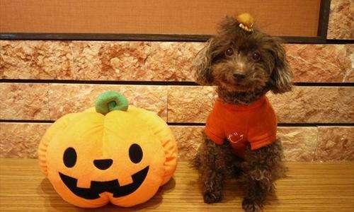 犬は『かぼちゃ』を食べられる! 食べることで嬉しいメリットも